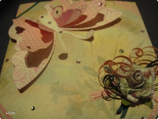 Бабочка. фото 6