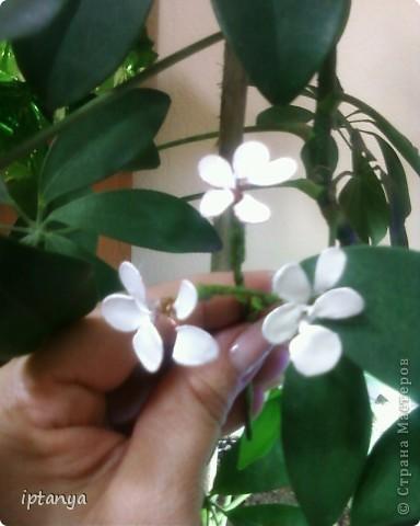 Вот такой у меня получился цветочек.
