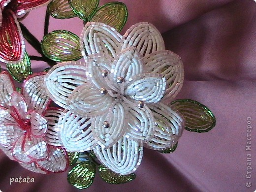 Цветочный бум (9 фото) фото 2