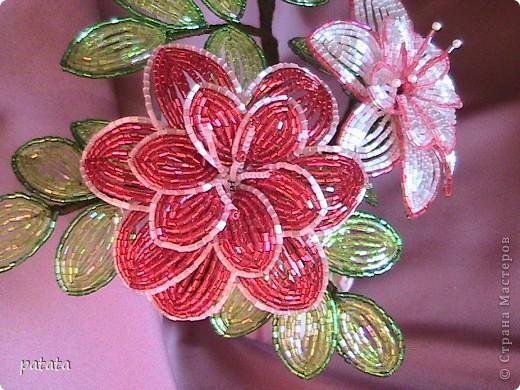 Цветочный бум (9 фото) фото 3
