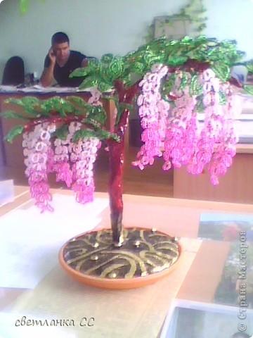еще одно деревце фото 1