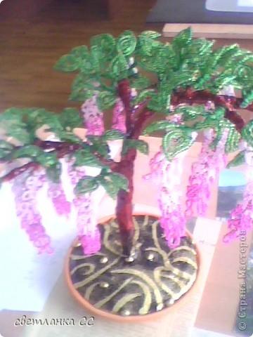еще одно деревце фото 2