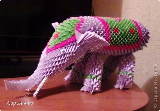 Мой индийский слон фото 6