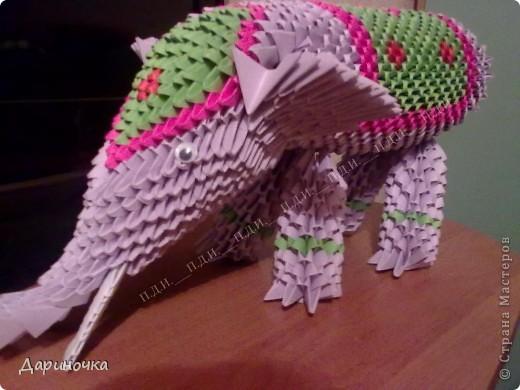 Мой индийский слон фото 5