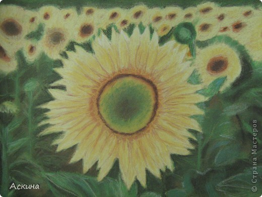 Это мой первый рисунок пастелью. Рисовала по самоучителю. фото 9