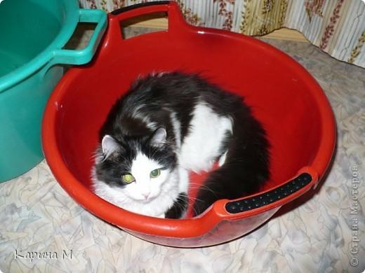 Знакомьтесь, я Анфиса. Родилась 10 ноября 2009 года))) фото 10