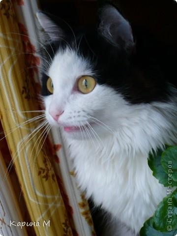 Знакомьтесь, я Анфиса. Родилась 10 ноября 2009 года))) фото 16