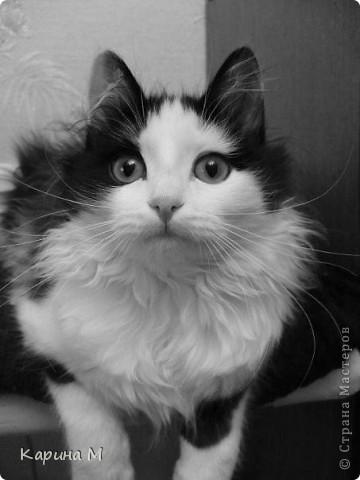 Знакомьтесь, я Анфиса. Родилась 10 ноября 2009 года))) фото 7