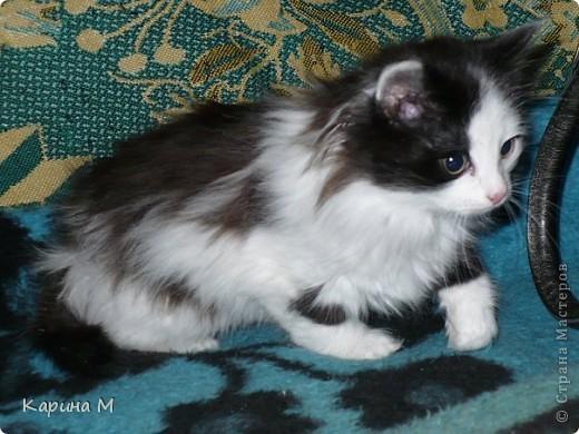 Знакомьтесь, я Анфиса. Родилась 10 ноября 2009 года))) фото 3