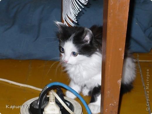 Знакомьтесь, я Анфиса. Родилась 10 ноября 2009 года))) фото 2