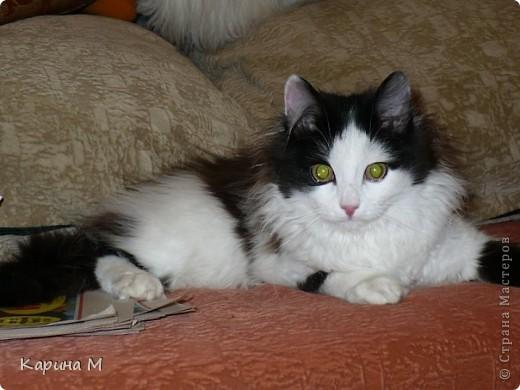 Знакомьтесь, я Анфиса. Родилась 10 ноября 2009 года))) фото 14