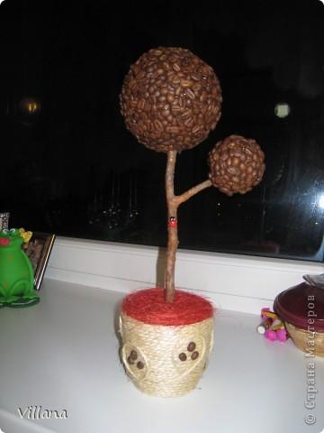 Кофейное дерево)))