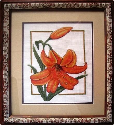 Оранжевый дуэт  фото 1
