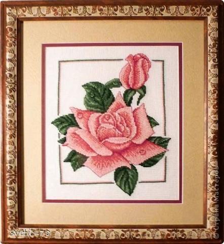 Розовый дуэт