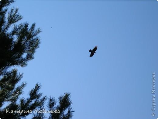 Когда ты идёшь по тропинке лесной, Вопросы тебя обгоняют гурьбой. фото 2