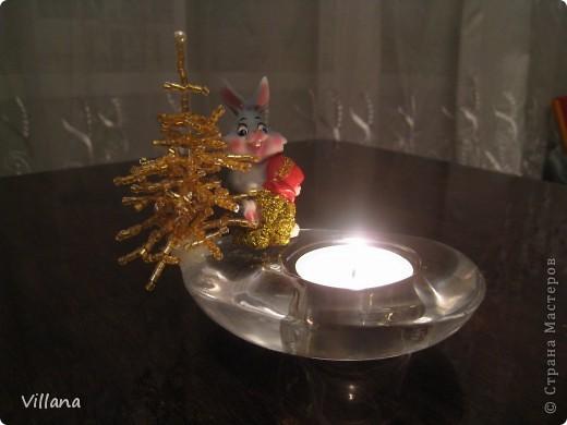 Зима - холода , а у меня дома выросли пальмы . Выращены мужу в подарок на День Рождение))))) фото 9