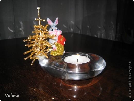 Зима - холода , а у меня дома выросли пальмы . Выращены мужу в подарок на День Рождение))))) фото 10