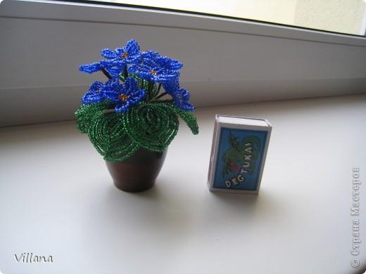 Зима - холода , а у меня дома выросли пальмы . Выращены мужу в подарок на День Рождение))))) фото 8