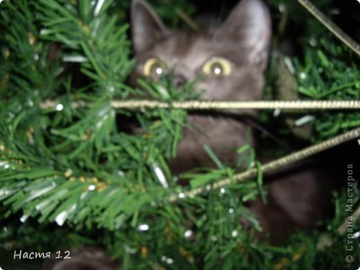 Это моя кошка,её зовут ТУСЯ.Она очень любит играть с ёлкой!!! фото 6