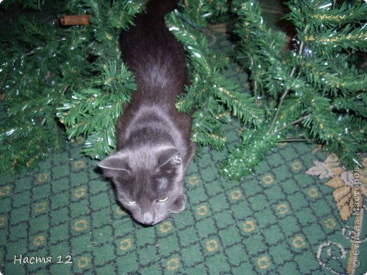 Это моя кошка,её зовут ТУСЯ.Она очень любит играть с ёлкой!!! фото 2