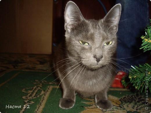 Это моя кошка,её зовут ТУСЯ.Она очень любит играть с ёлкой!!! фото 1