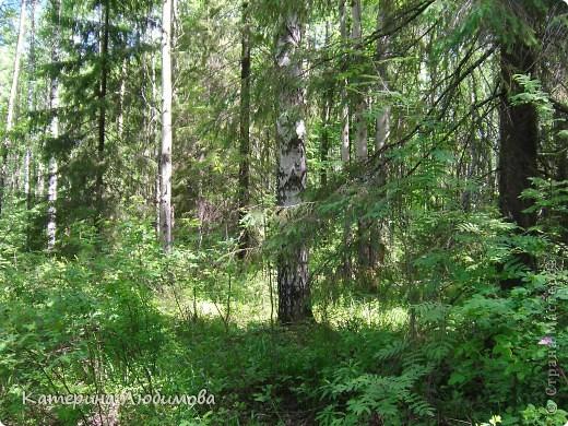 Когда ты идёшь по тропинке лесной, Вопросы тебя обгоняют гурьбой. фото 1