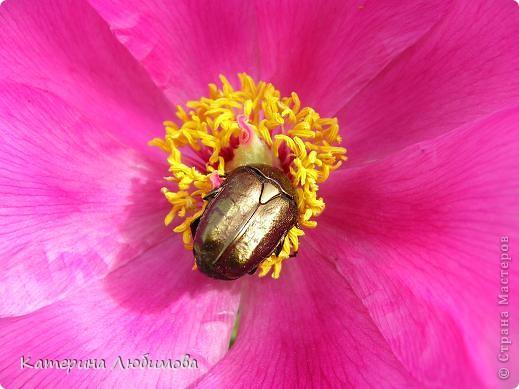 Живёт повсюду красота:  Живёт ни где-нибудь, а рядом,  Всегда открыта нашим взглядам,  Всегда доступна и чиста.  Живёт повсюду красота:  В любом цветке, в любой травинке  И даже в маленькой росинке,  Что дремлет в складочке листа.  А-а-а...   Живёт повсюду красота:  Живёт в закатах и рассветах,  В лугах, туманами одетых,  В звезде, манящей как мечта.  Живёт повсюду красота,  Сердца нам радуя и грея,  И всех нас делает добрее  Она наверно неспроста.  А-а-а...   Юрий Антонов  фото 8