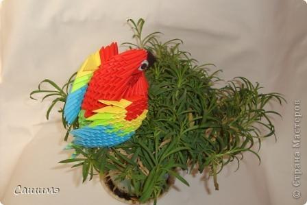 попугайчик фото 2