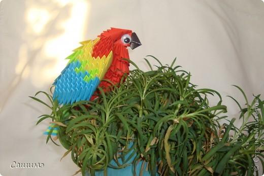 попугайчик фото 1