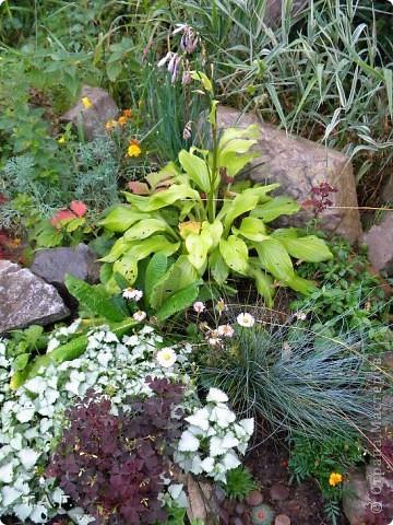 На дворе середина зимы красивой, нарядной, с морозами и снегопадами. Но многие из нас уже запаслись семенами... Я хочу показать малую часть тех цветов, что прижились на нашем участке. Есть среди них капризные, а есть и совершенно неприхотливые. Мне хотелось предложить жителям Страны Мастеров найти пару для растений, но подумав решила сама разместить их рядом. Присмотритесь внимательно к той необычной красоте, что окружает нас в повседневной жизни.  фото 44