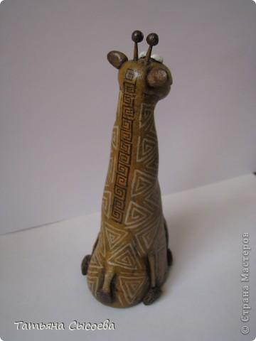Жираф  фото 2