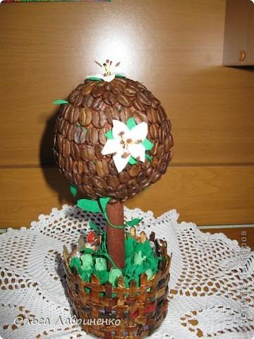 Так захотелось цветущего кофейного деревца... Спасибо Стране Мастеров и мастерицам что научили меня творчеству.Размер дерева:высота-21 см, диаметр кроны  и вазончика-8 см, высота вазончика -8 см. По стволу вьется лиана. По кроне идут тоже листики. фото 1