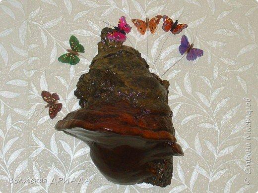 Это древесный гриб фото 1