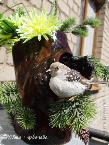 Гнездо в дупле фото 1
