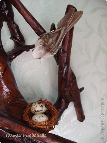 Птицы на гнезде фото 2