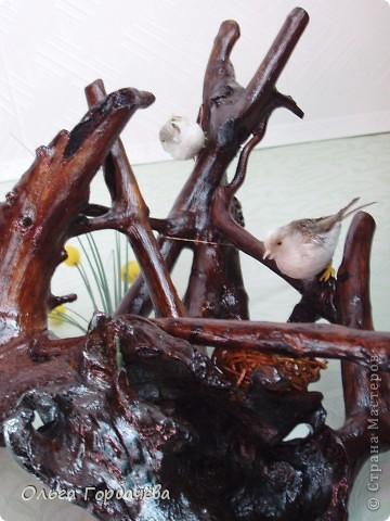 Птицы на гнезде фото 3