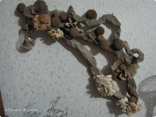 Речная коряга + семена платана+лесные древесные грибы. фото 1