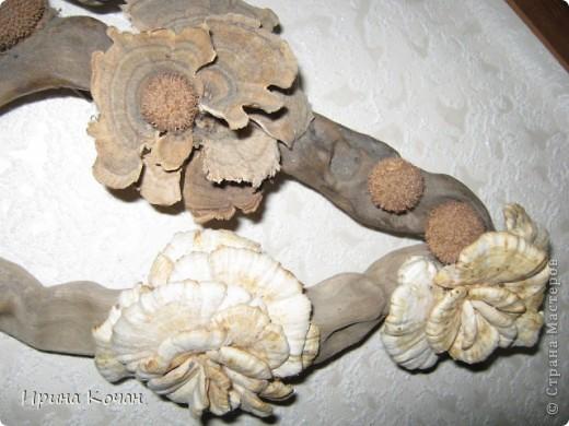 Речная коряга + семена платана+лесные древесные грибы. фото 2