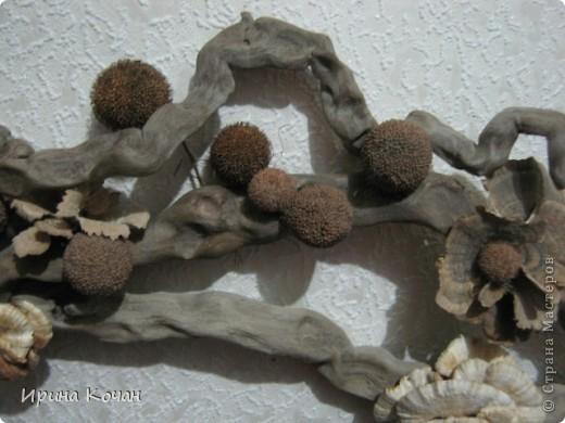 Речная коряга + семена платана+лесные древесные грибы. фото 3