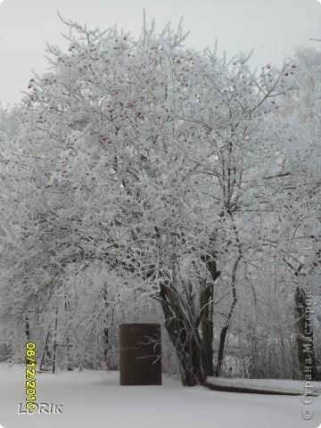 В этот день было так красиво на улице, что я не удержалась и стала фотографировать. Ближе к обеду снег осыпался и деревья стали не так нарядны.  фото 3