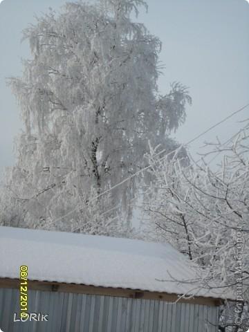 В этот день было так красиво на улице, что я не удержалась и стала фотографировать. Ближе к обеду снег осыпался и деревья стали не так нарядны.  фото 1