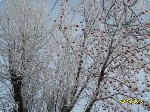 В этот день было так красиво на улице, что я не удержалась и стала фотографировать. Ближе к обеду снег осыпался и деревья стали не так нарядны.  фото 2