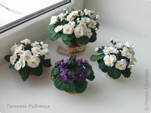 ... опять фиалки))) Попросили слепить именно белые для подарка. фото 1