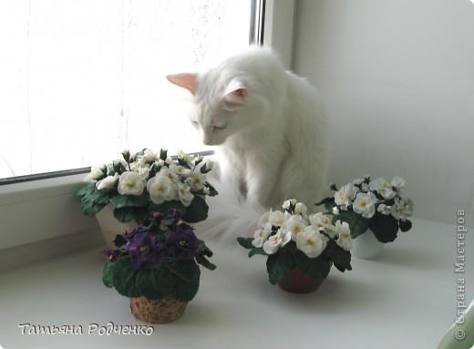... опять фиалки))) Попросили слепить именно белые для подарка. фото 4