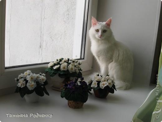 ... опять фиалки))) Попросили слепить именно белые для подарка. фото 7