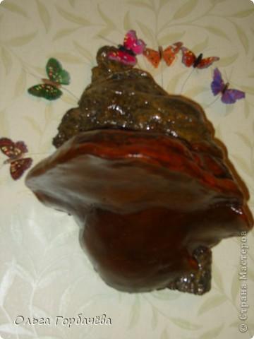 Это древесный гриб фото 2