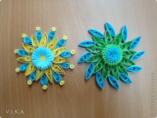 Мои цветочки! фото 2