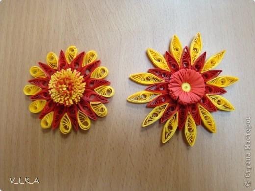 Мои цветочки! фото 5