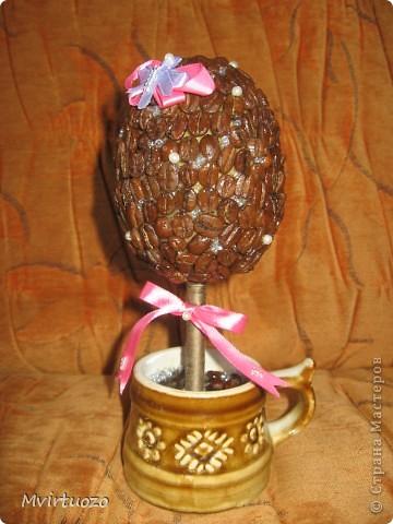 Выставляю на Ваш суд свое новое кофейное деревце-капучино. фото 1