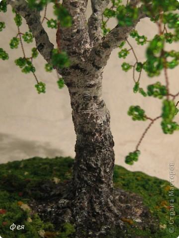 Весенняя берёзка:) фото 6